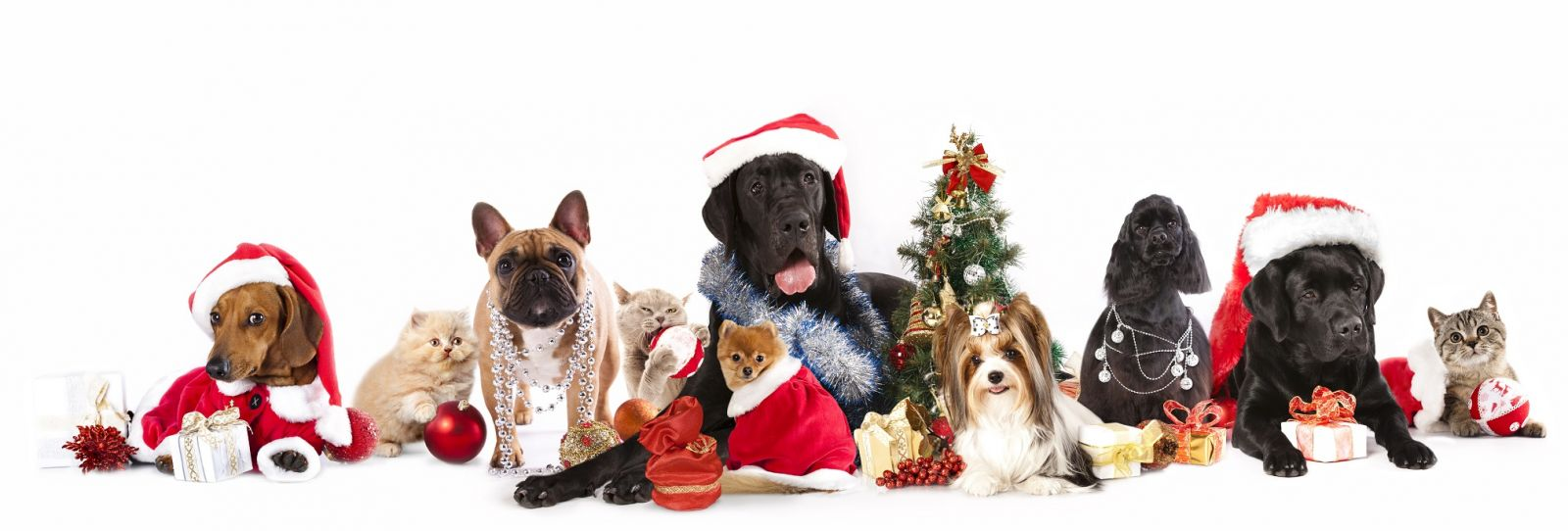 Image result for pets christmas